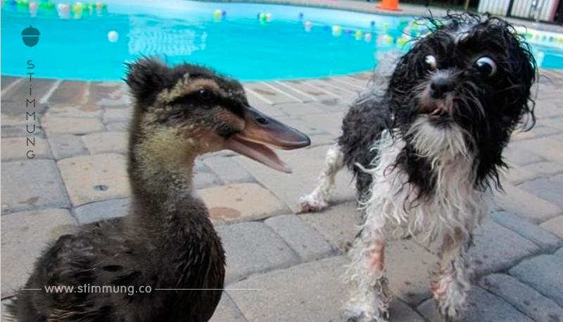 19 Hunde, die vor Kleinigkeiten Angst haben.