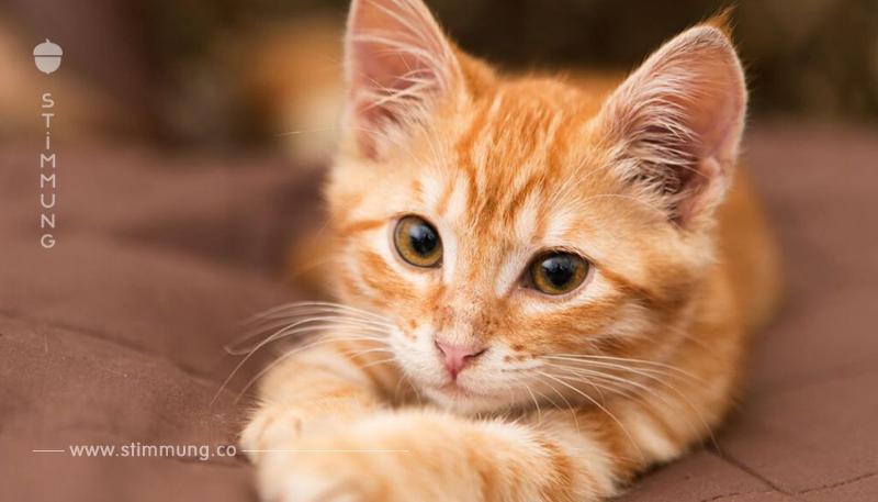 Eine Tierschutzkatze zieht ein