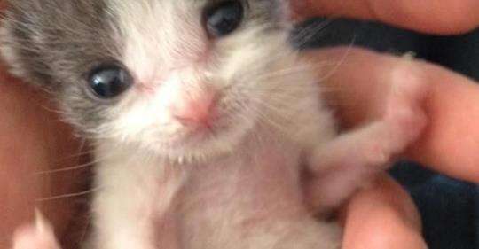 Ein Mann rettet ein ausgesetztes Kätzchen – 1 Jahr später zahlt ihm Baby das immer noch mit endlosem Kuscheln und Liebe zurück