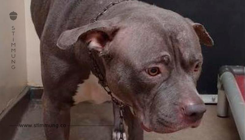Ein virales Video zeigt den Herzschmerz eines Hundes in dem Moment, in dem sie merkt, dass sie verlassen wurde