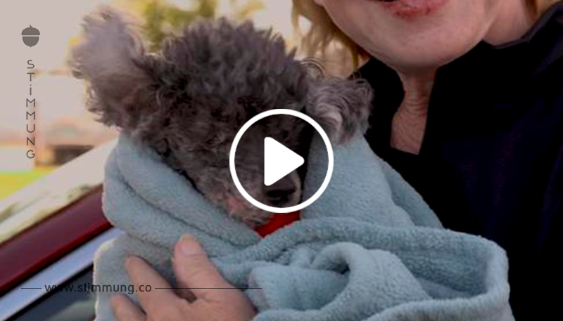 Ein Paar gibt einen Hund nahe dem Ende seines Lebens ans Tierheim ab, weil er