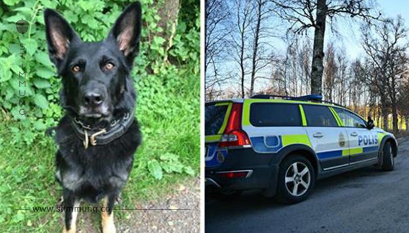 7 Stunden alte Spur gefunden & Mann das Leben gerettet – Lasst uns Polizeihund Happy den Respekt zollen, den sie verdient
