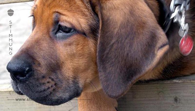 Hunden dürfen im Rahmen ihrer Ausbildung keine Schmerzen zugefügt werden