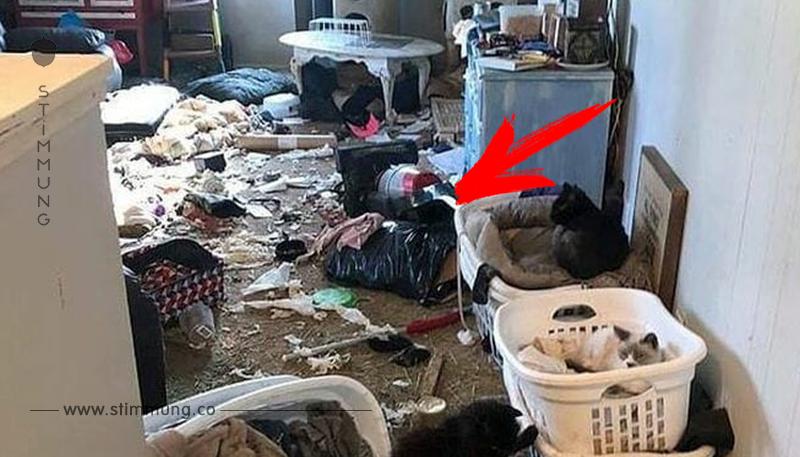 Tierpflegerin tötet 64 Katzen in eigener Wohnung – jetzt bekommt sie ihre Strafe