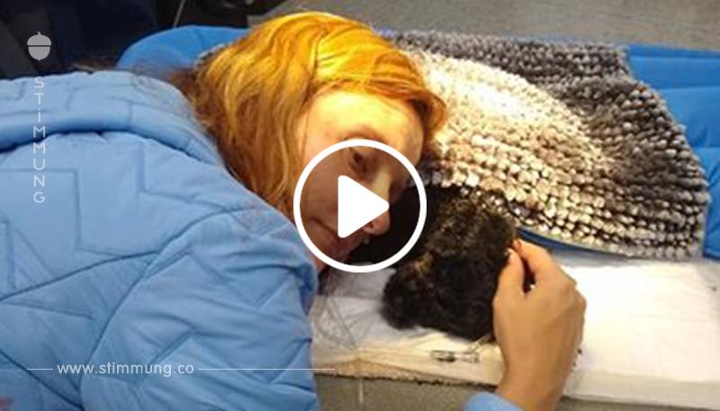 Als ein Bär bei ihnen zuhause einbrach, brachte dieser kleine Hund das größte Opfer, um seine Familie zu beschützen
