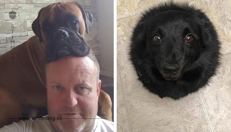 16 Situationen, die Hundebesitzer nur allzu gut kennen.