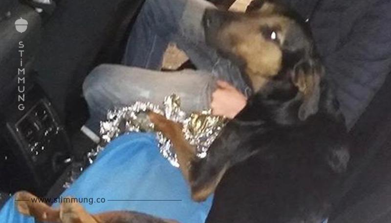 Fahrer fährt Mischling an und flieht: Polizei bringt verletzten Hund in Klinik
