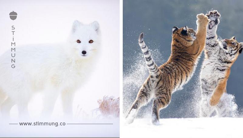 Bilder, die zeigen, wie vielfältig und schön unsere Erde ist