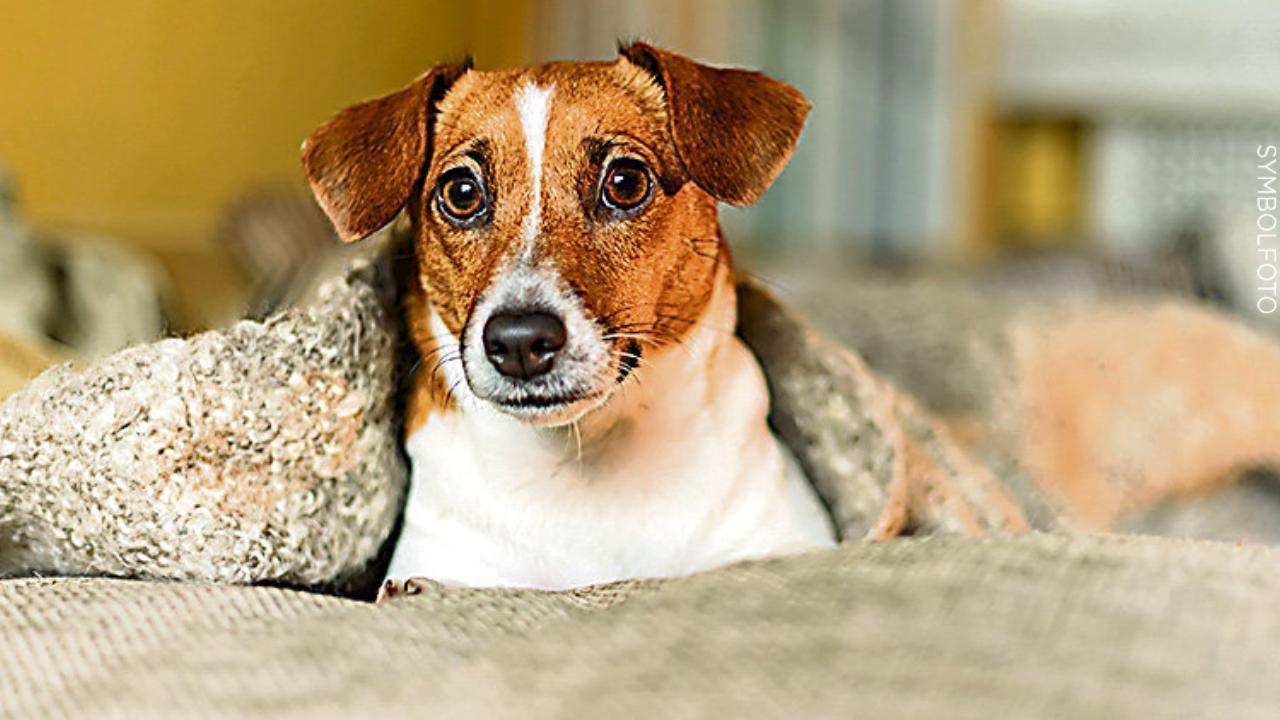 Polizei ermittelt   Hund vor Supermarkt aufgeschlitzt