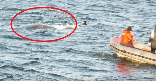 Wal kommt an die Wasseroberfläche, um die Aufmerksamkeit eines Fischers zu wecken – Er erkennt das Problem und springt ins Wasser