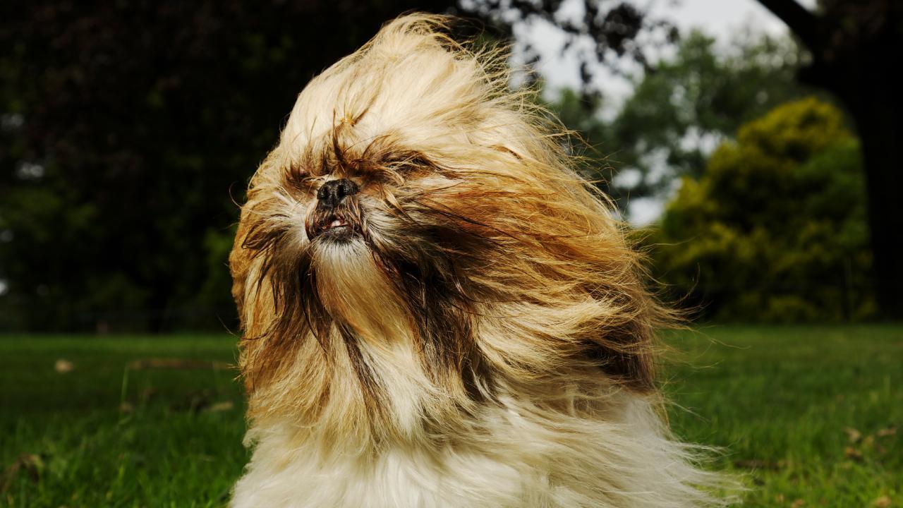 Weil Frauchen nicht allein ins Grab wollte: Gesunder Hund wird eingeschläfert