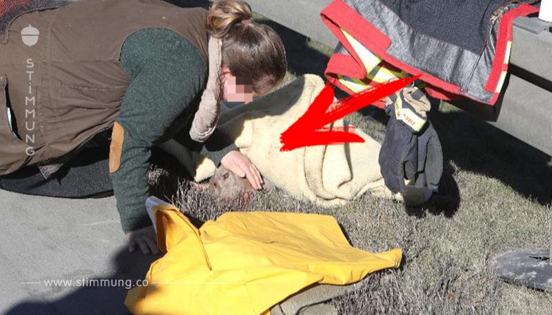 Tier auf A 9 totgefahren: Rettungshunde auf Autobahn verunglückt