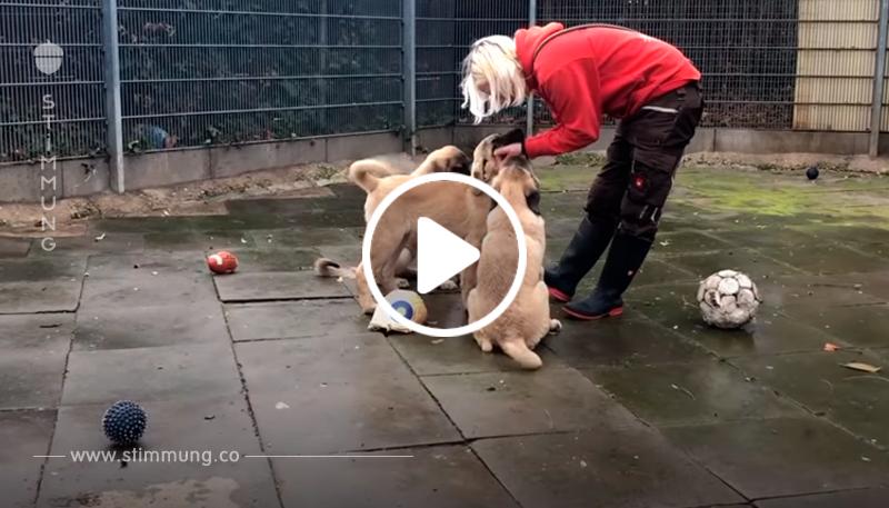 Hunde Babys auf Parkplatz bei Frankfurt einfach ausgesetzt