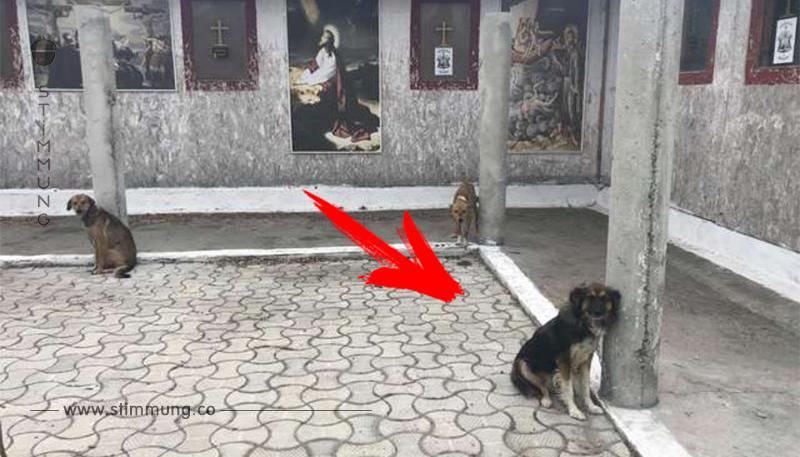 18 Hunde vor Kirche angebunden: Die Worte des Priesters sind schockierend