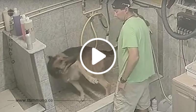 Versteckte Kamera filmt Hundefriseur, wie er Deutschen Schäferhund quält