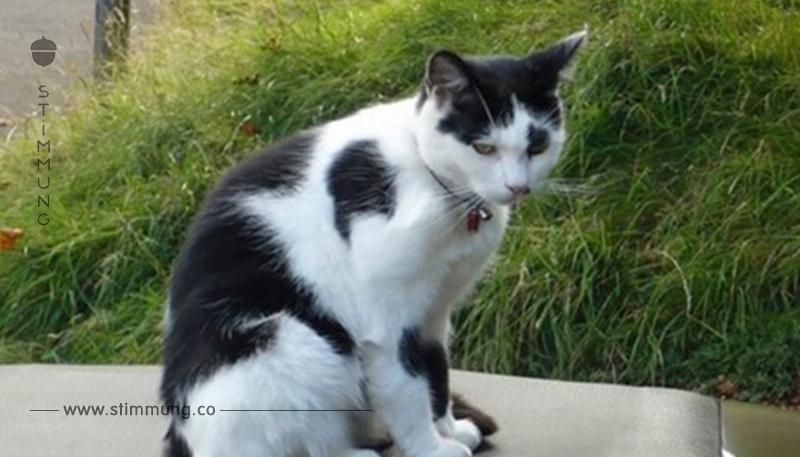 Nach 9 Jahren: Katze kehrt für eine letzte Umarmung nach Hause zurück