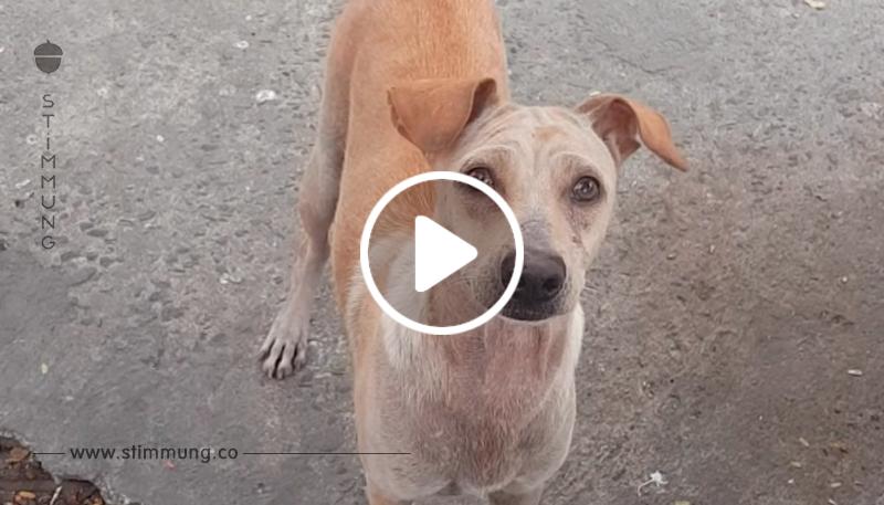 Hungrige Hundemutter bringt geschenktes Fressen zu ihren Welpen.