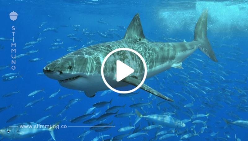 Glücksfall: Amerikaner überlebt schrecklichen Angriff eines weißen Hais.