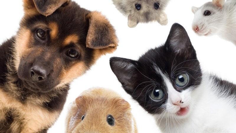 9 Haustiere, die den Charakter ihrer Besitzer verraten.