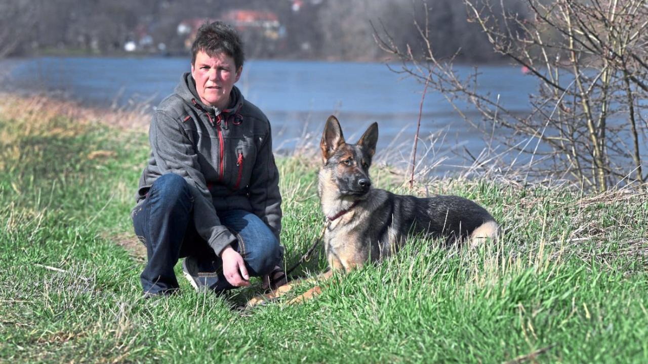 Rattengift auf Dresdner Elbwiesen: Hundehasser legten mindestens 40 Giftköder aus