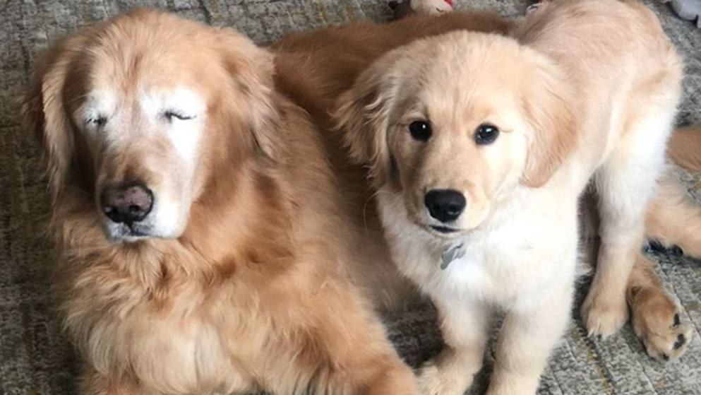 Tierisch beste Freunde: Blinder Hund bekommt Blindenhund