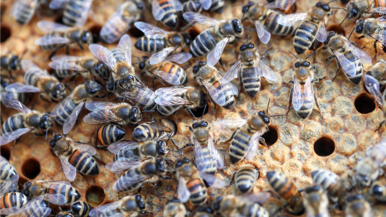Wer macht denn SO WAS? Unbekannte töten zwei Bienenvölker in NRW!