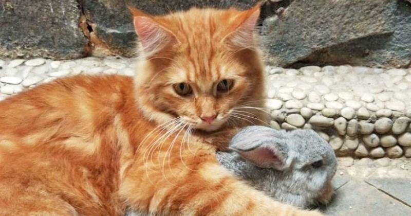 Können Kaninchen mit Katzen oder Hunden befreundet sein?