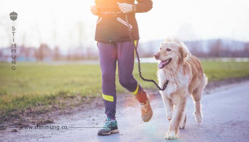 Canicross: Mit dem Hund an der Leine joggen