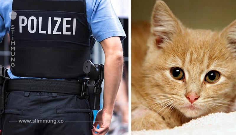 Mann wird verdächtig, ein Katzenkiller zu sein und wird festgenommen – er soll 25 Katzen getötet haben