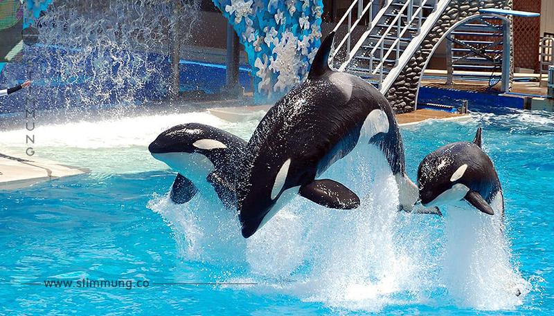 Tierschutz: Kanada verbietet Zoo Haltung von Delfinen und Walen