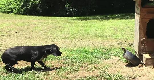 Ein Hund, der aus einem Heim entfernt wurde, in dem sich niemand um ihn kümmerte, findet neue liebevolle Herrchen.