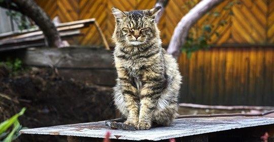 In 1988 adoptierte Katze feiert dieses Jahr ihren 30. Geburtstag