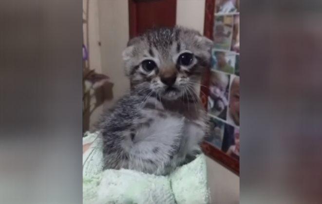 Allein und verängstigt: Frau schenkt Kätzchen ein neues Zuhause!