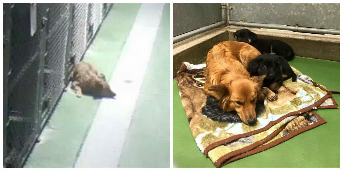 Als zwei verängstigte Welpen in ein Tierheim gebracht werden, zeigt Hunde Mama ihr großes Herz