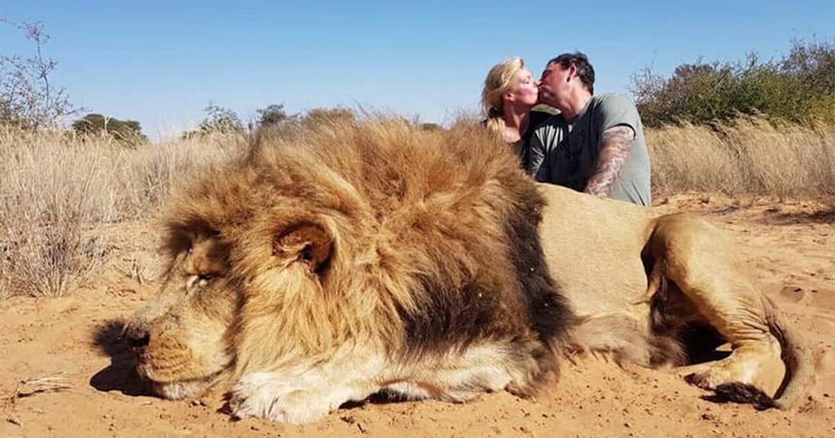 Wütende Tierschützer: Trophäenjäger küssen sich provokant hinter erschossenem Löwen