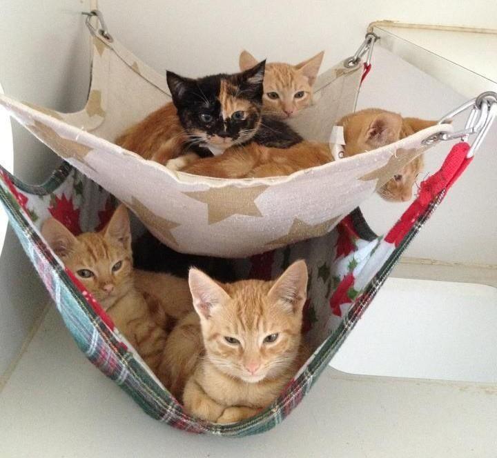 Machen Sie mit diesen 10 wahnsinnigen Ideen ein wunderbares komfortables Plätzchen für Ihre Katze!