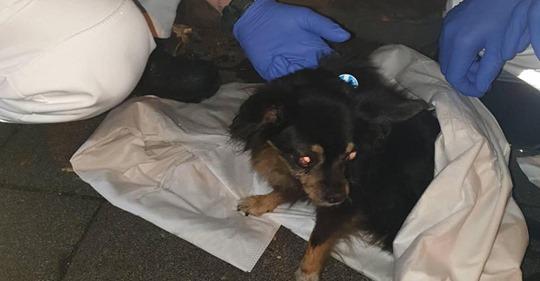 Feuerwehr rettet Hund aus brennender Wohnung