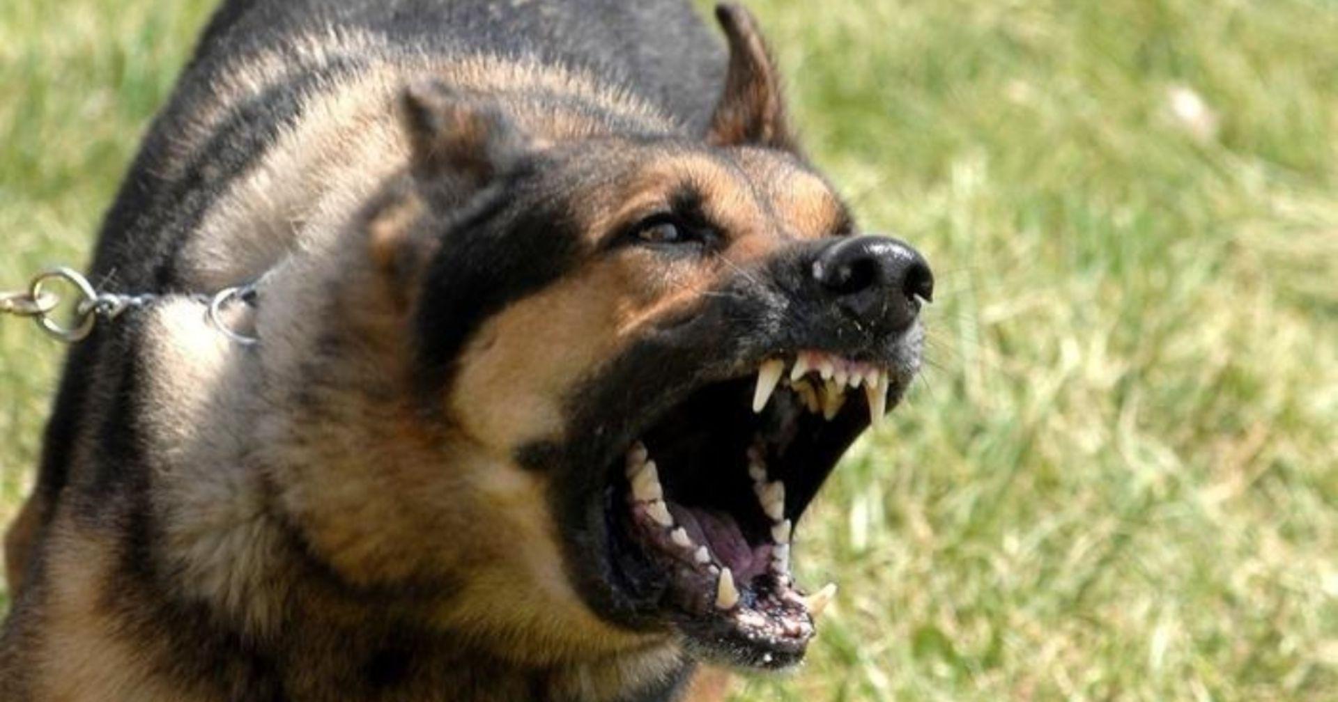 Drei Todesopfer: Nicht angeleinter Hund sorgt für Blutbad im Rheinland
