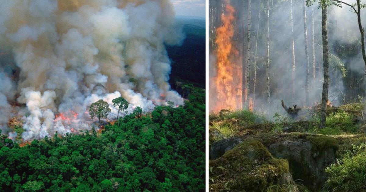 Brasilien: Schwere Waldbrände zerstören den Amazonas Regenwald – illegale Waldrodung schuld