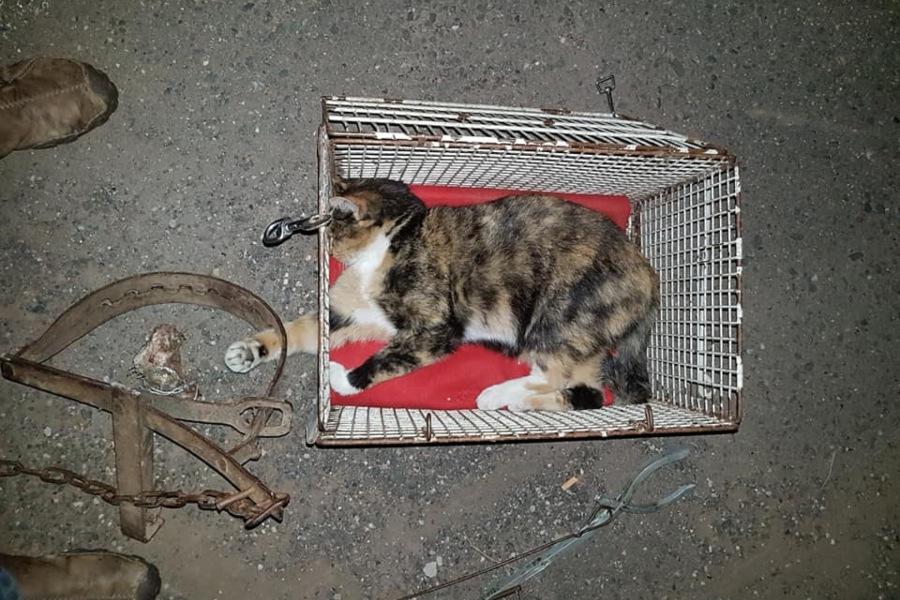 Tierarzt röntgt Kätzchen: Fiese Falle hätte auch Kinder Knochen zertrümmern können!