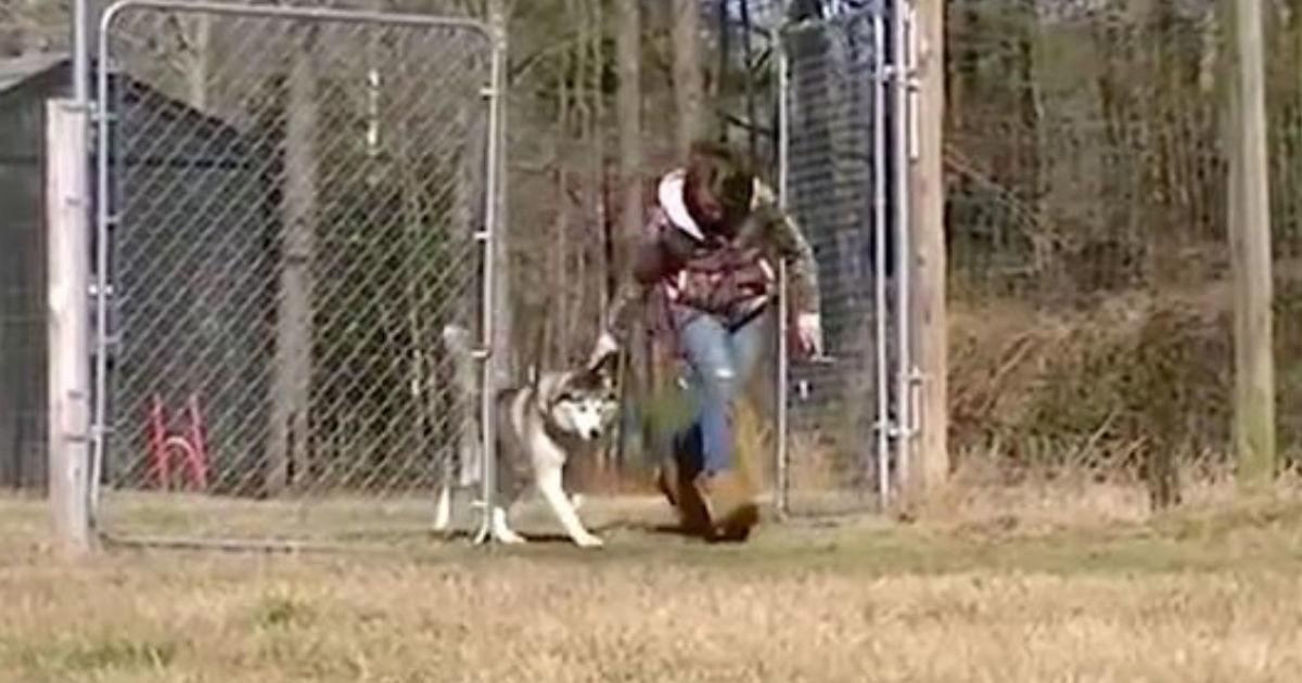 Nachdem der Husky Biscuit sein ganzes Leben an einer Kette verbracht hat, wird ihm ein leeres Feld gezeigt