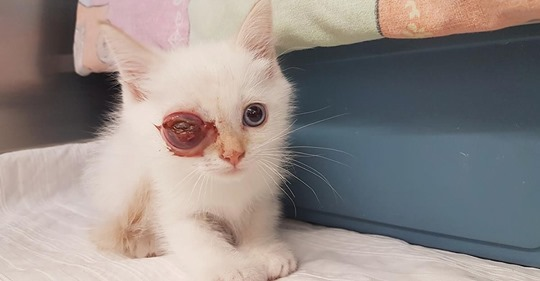 Warum setzt man sie so aus? Baby Katze mit Augenentzündung an Straße gefunden