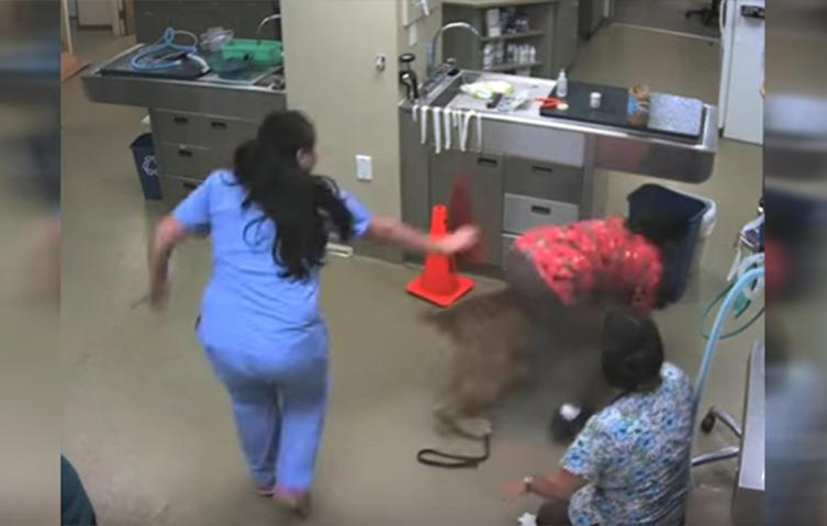 Tierarzt? Ne, Danke! Hund rennt mit Ärztin auf dem Rücken davon