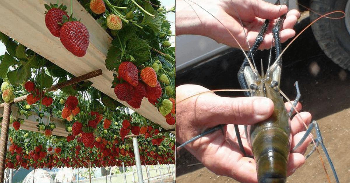 7 kuriose Gartentricks, die funktionieren.
