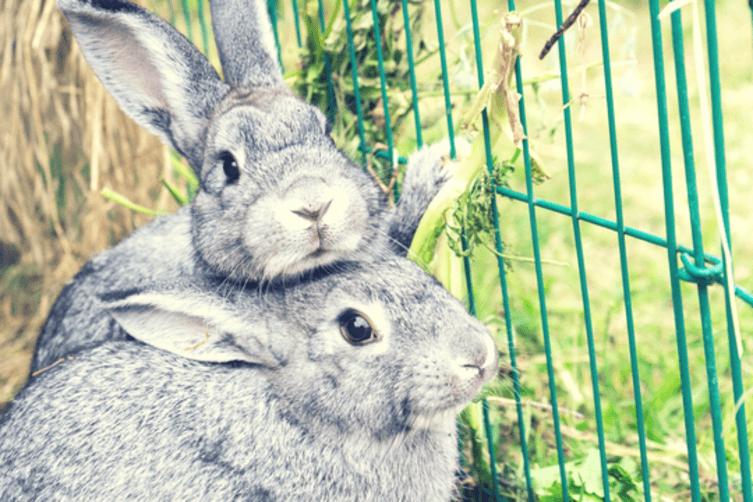 So haltet ihr Kaninchen artgerecht!