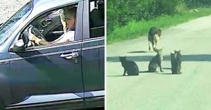 Frau, die von Tierheim abgewiesen wurde, lässt 11 Haustiere mitten auf einer Straße zurück und fährt davon
