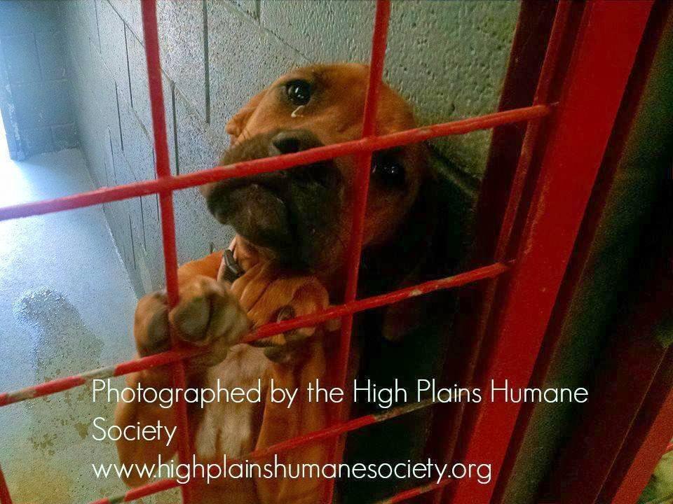 Hündin in einem Tierheim in New Mexico winselt jede Nacht, bis sie endlich adoptiert wird