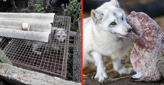 15 gerettete Tiere während und nach der Gefangenschaft