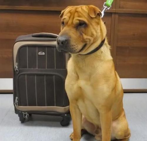 Hund wird an Bahnsteig zurückgelassen, angebunden an einen mit seinen Lieblingssachen gefüllten Koffer