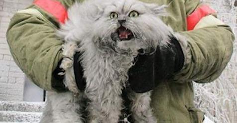 15 Beweise, dass wir Katzen überhaupt nicht verdient haben